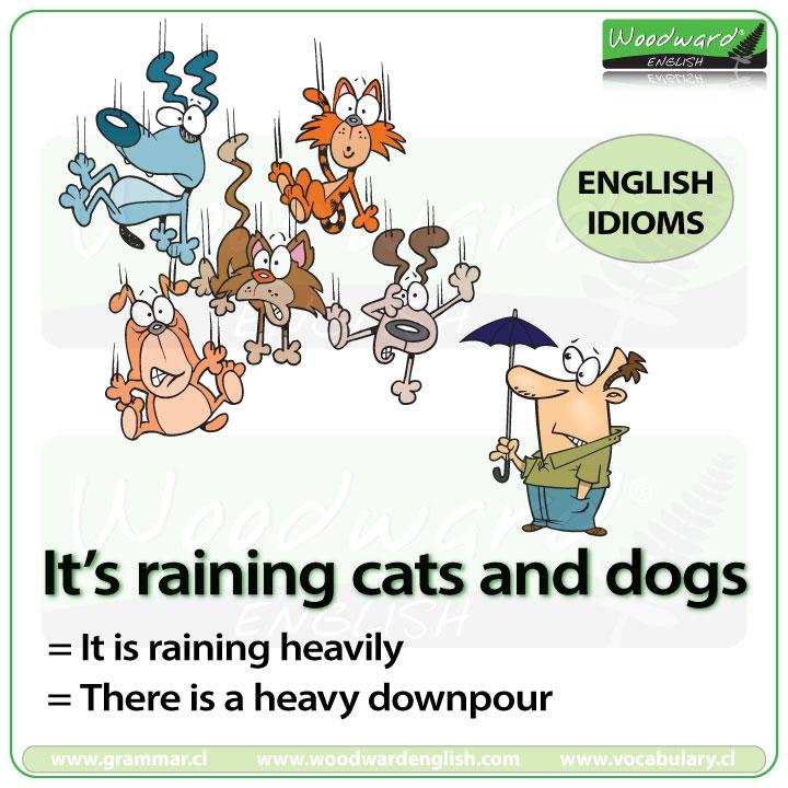 Resultado de imagem para it's raining cats and dogs