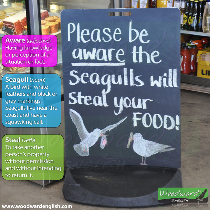 Seagulls steal food sign at a cafe in New Zealand. Includes English vocabulary meaning.