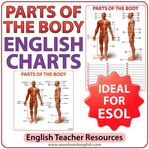 English parts of the body charts and worksheet for ESOL students