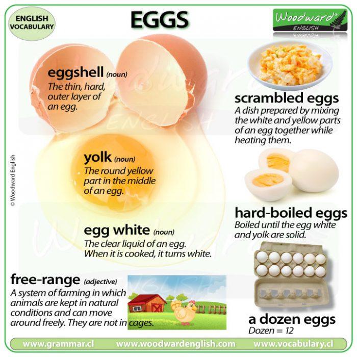 Egg vocabulary in English - eggshell, yolk, egg white, free-range, scrambled eggs, hard-boiled eggs, dozen.