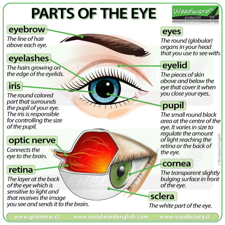 Parts of the Eye - English Vocabulary