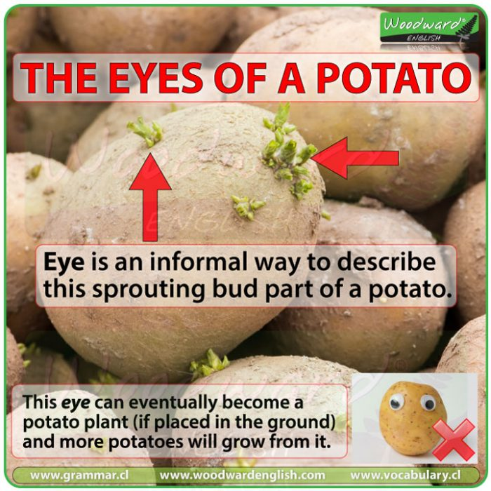 Potato eyes meaning. What are potato eyes? What are the eyes of a potato?